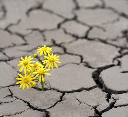 climate-hope-846x771