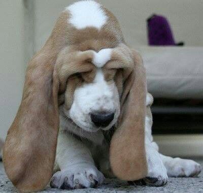 worry_dog