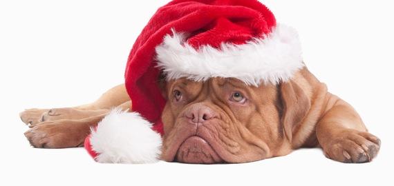 sad-dog-santa-christmas-featured