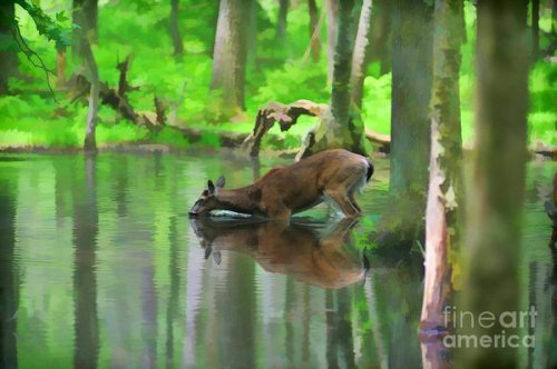 deer-drinking-water-dan-friend